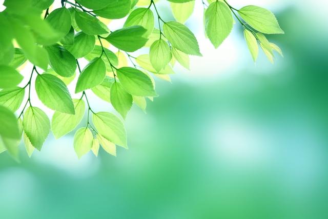 新緑の季節ですね☆
