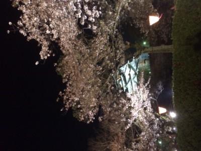 大阪城でお花見!
